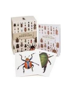 A Box of Beetles : 100 Beautiful Postcards