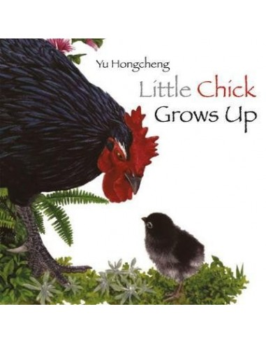 Little Chick Grows Up